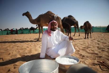 Верблюжье молоко в ОАЭ