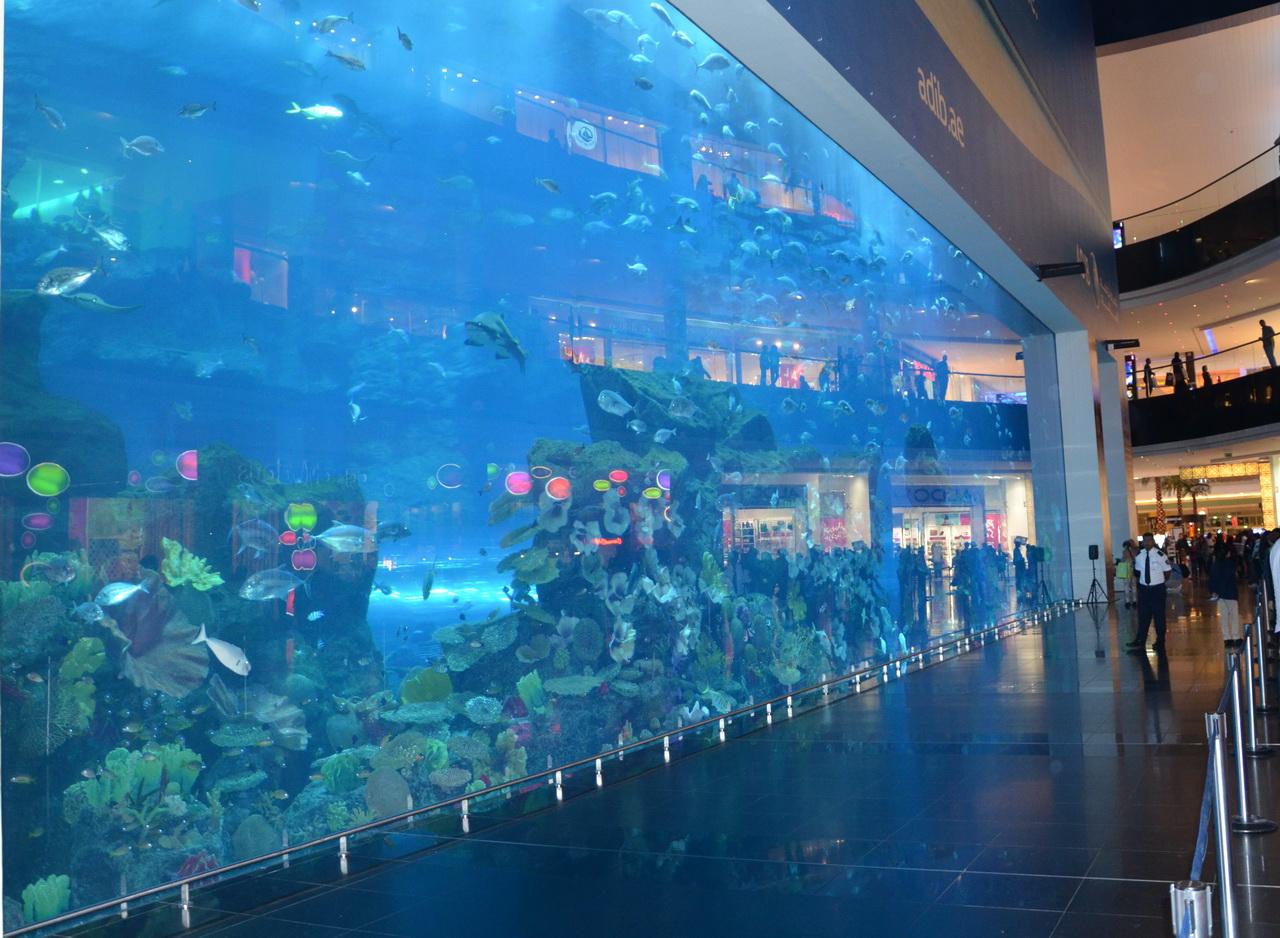 Океанариум в Дубаи Молл