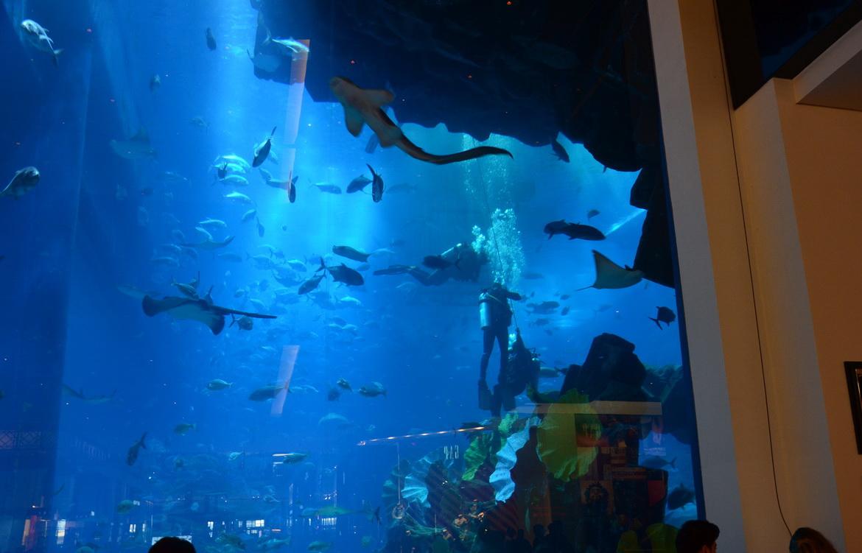 Погружение в аквариум