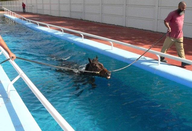 бассейн для лошадей, конюшни Дубая
