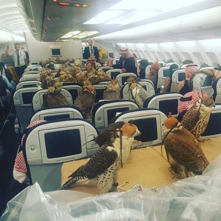 Соколы в самолете и саудовский принц