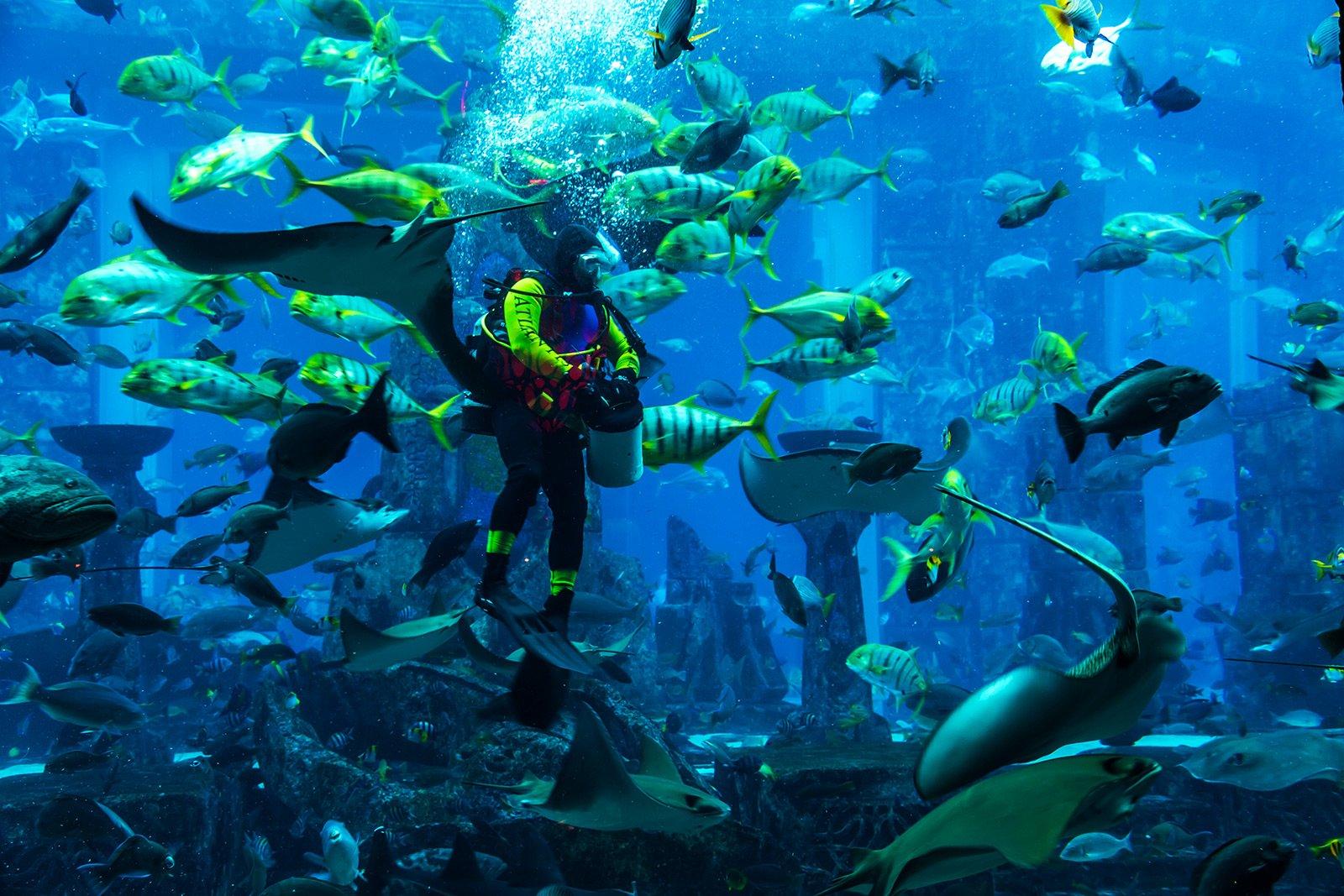 Дайвинг с акулами в Дубае