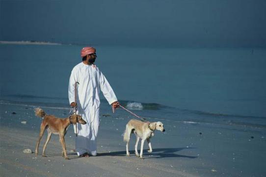 Арабские собаки