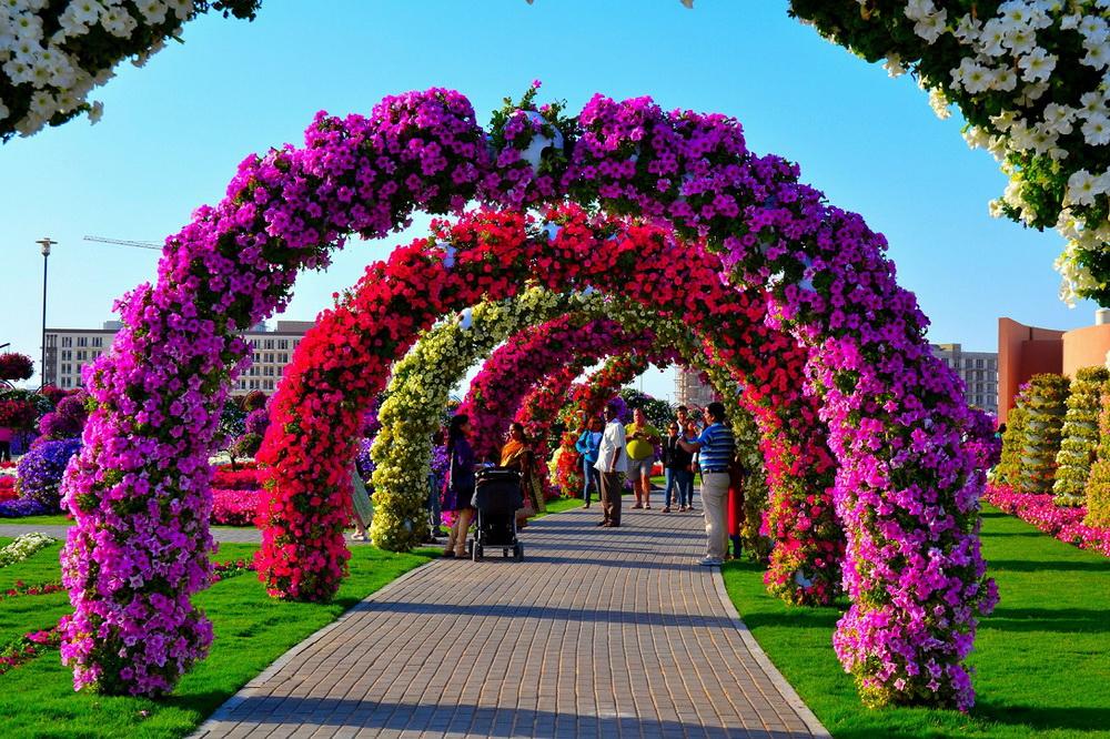 Сад цветов дубай