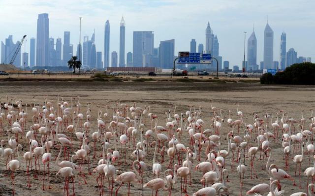 Острова фламинго в Дубае