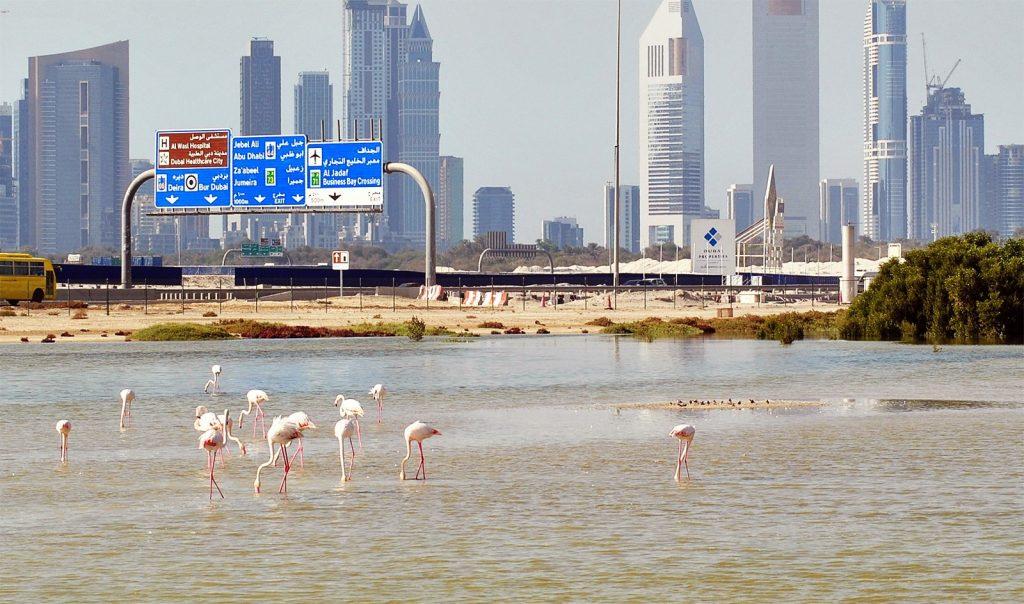 Фламинговые острова в Дубае