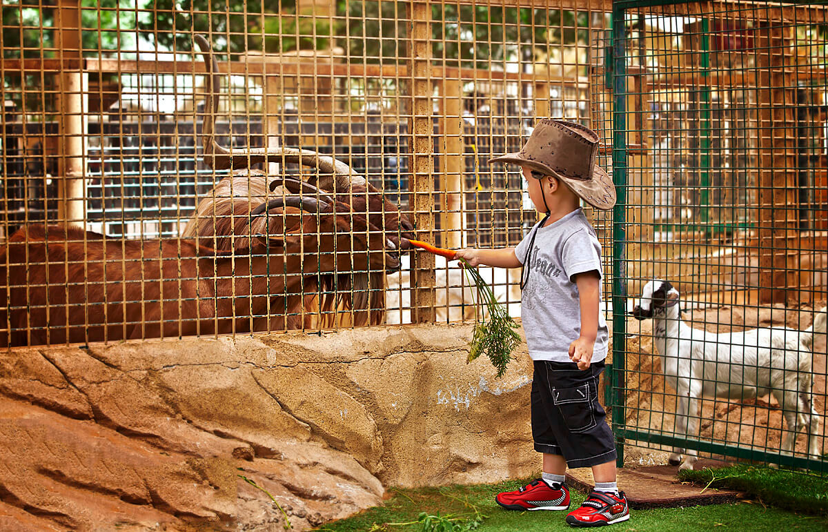 Зоопарк Джумейра
