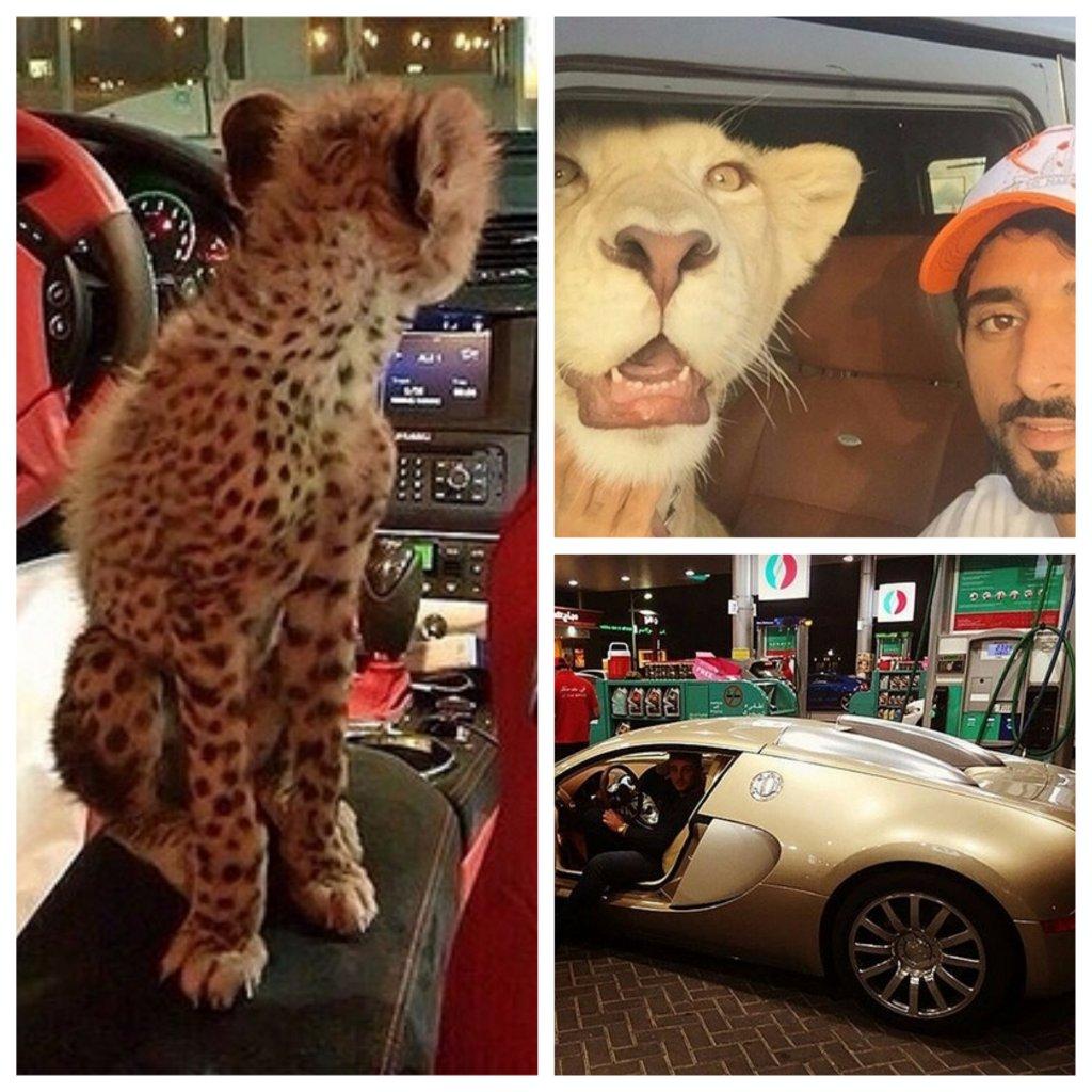 богатая жизнь Дубая